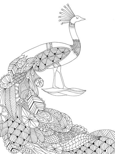 lizzie-preston-peacock-jpg