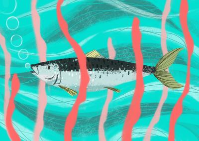 sardine-jpg