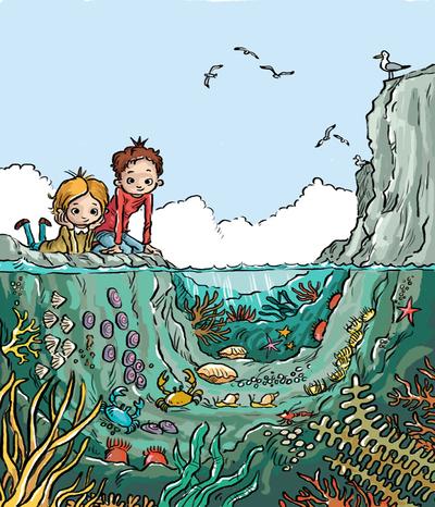 jon-davis-rock-pool-underwater-01-copy-jpg