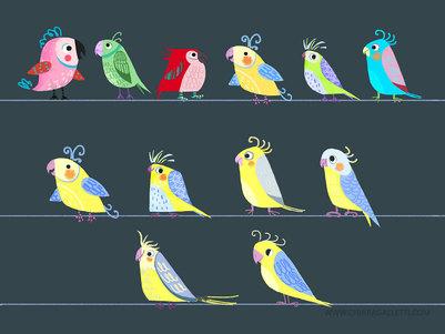 parrot-character-design-studies-chiara-galletti-jpg
