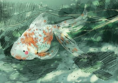 koi-underwater-blue-water-light-cute-erinbrown-jpg