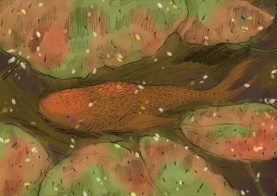 lilypads-goldfish-orange-pond-water-erinbrown-jpg